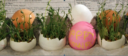 Nowruz Craft: Sprouts in Eggshells